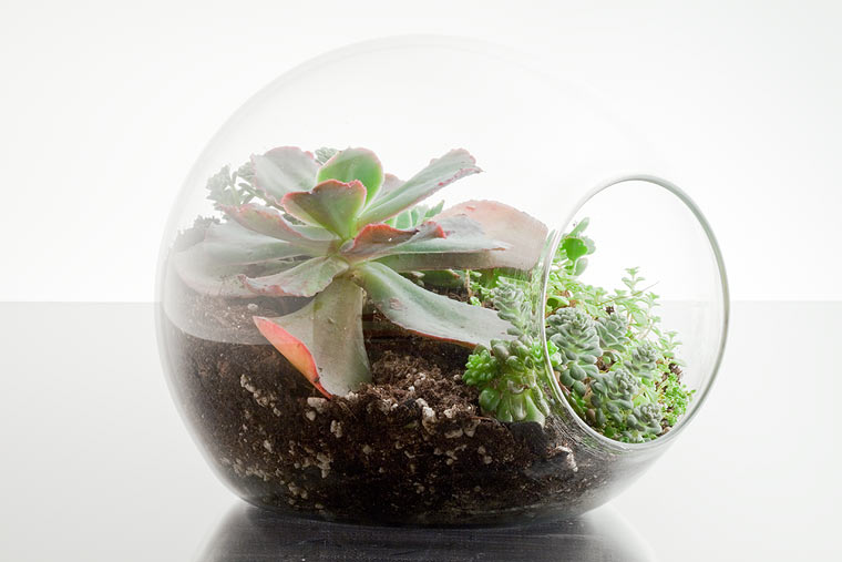 Mini Terrariums To Decorate Your Indoor Space By Botany