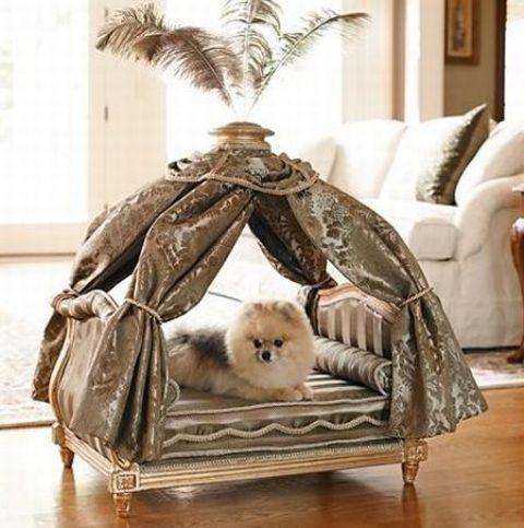 Pet Resort Ideas