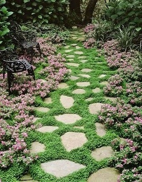 a catchy garden stone path with various shapes and greenery growing in between, it enlivens the look