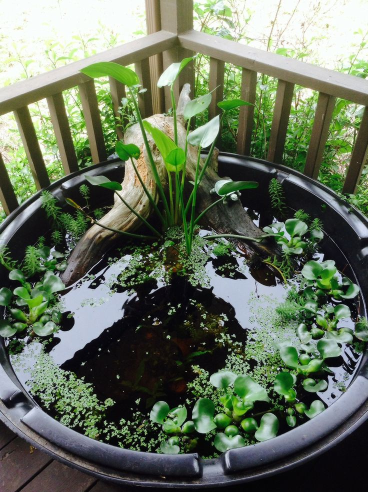 a mini pond in a black plastic tub, with driftwood and some floating water plants on the surface