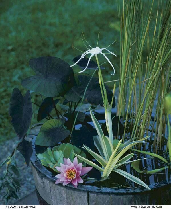 a mini pond in a wooden basket, with water plants and blooms is a peaceful and cool outdoor decoration to rock