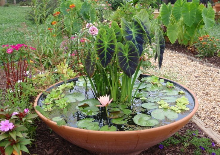 a porcelain bowl with water plants is a nice mini pond idea suitable for your outdoor space