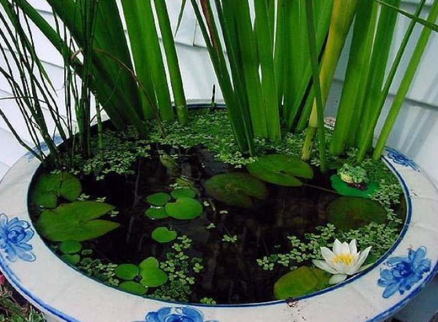 a floral print white and blue porcealin bowl with lots of greenery and water lilies looks catchy and romantic