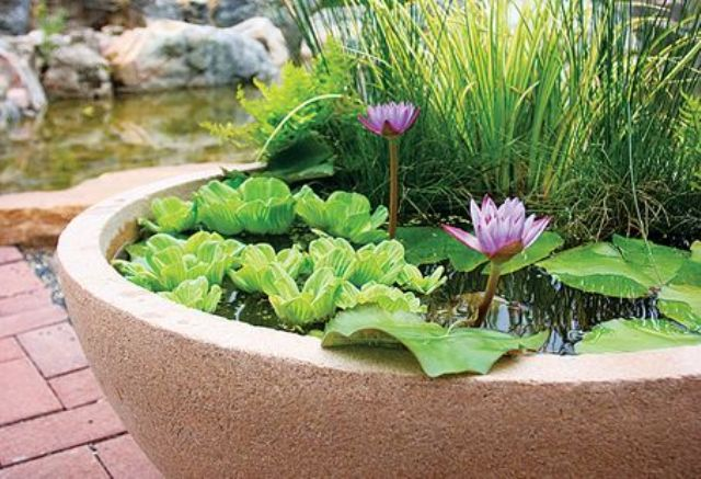 a light colored stone plaster as a pond, with greenery, grasses and bright pink blooms for beautiful outdoor decor