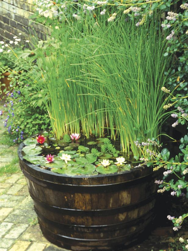 an old barrel with floating plants and blooms and tall grasses for a rustic and natural feel in your backyard