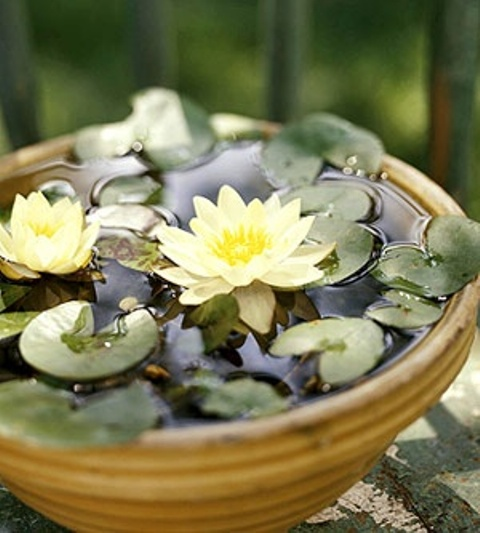 a small neutral porcelain bowl with floating water lilies is a lovely idea of a mini pond to try