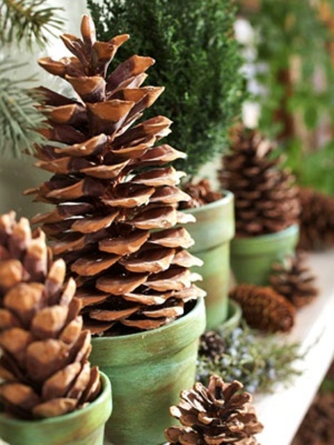 Pinecone topiaries would look great as indoors as outdoors. A mantel and some side table are perfect are as good places for such arrangement as a front porch.