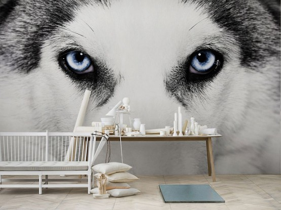 a neutral space done with a husky eyes wall mural that makes a bold statement