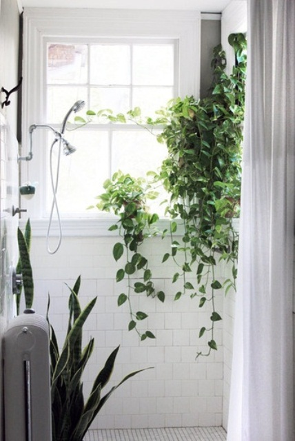 a small white bathroom with potted succulents and a suspended planter with greenery is super cool and filled with natural light