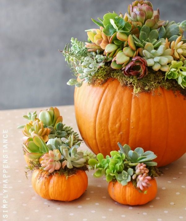 orange pumpkins with succulents and air plants are cool fall and Thanksgiving decorations