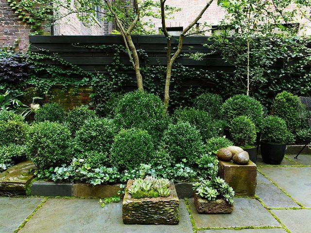 a small townhouse garden with planted greenery and trees, a living wall and some stone bow flower beds