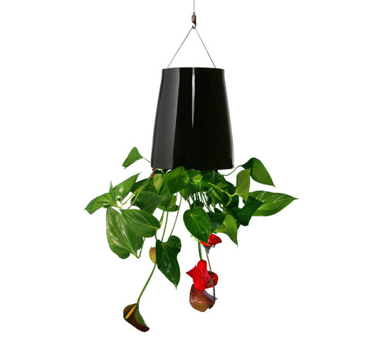 Boskke Sky Planter – Turn Your World Upside Down