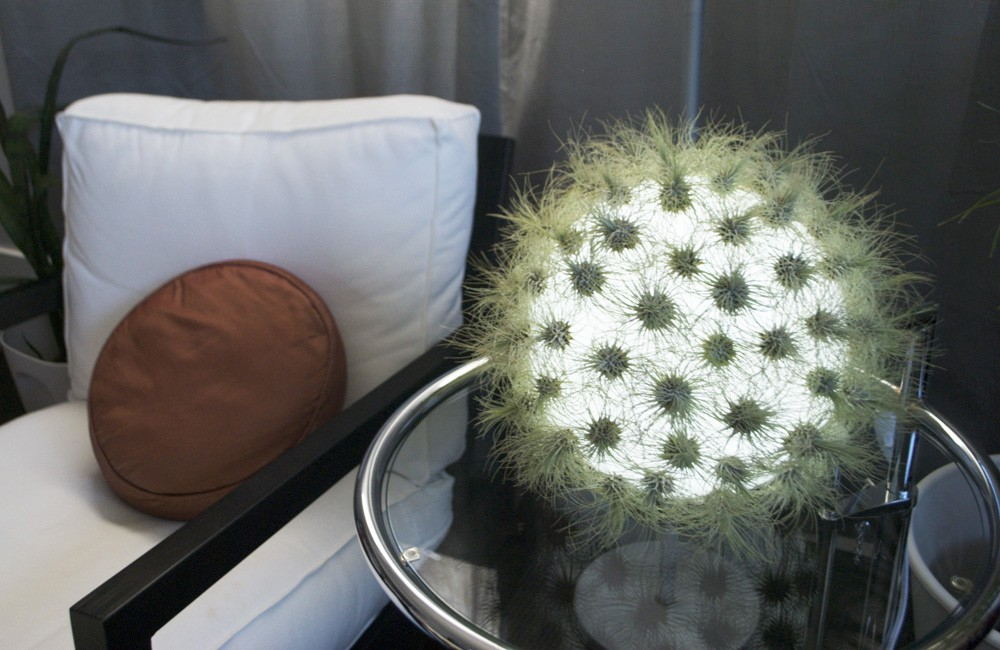 Cactus Inspired Tabletop Lamp – Live Lamp by Kara Bartlet