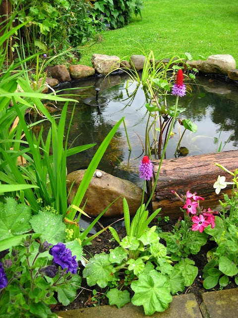 Lawn is also a great surrounding to a backyard's pond.