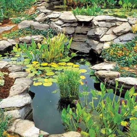67 cool backyard pond design ideas digsdigs for Koi pond plant ideas