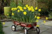 a garden cart with daffodils is a pretty modern spring decor idea to make