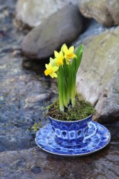 a refined blue and white tea mug with a saucepan with daffodils and moss is a sophisticated spring decoration