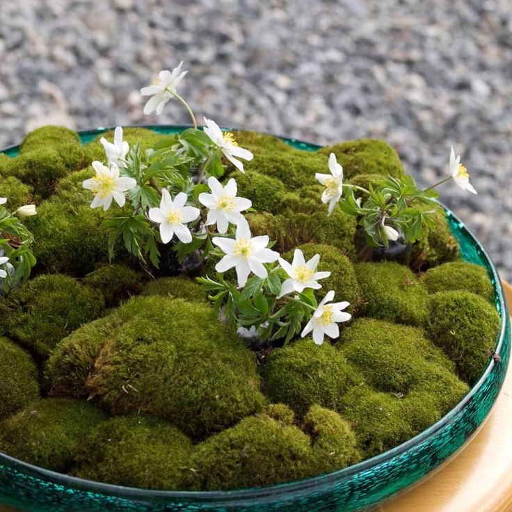 a green bowl with lots of moss and some fresh spring blooms is a great idea for a centerpiece or decor