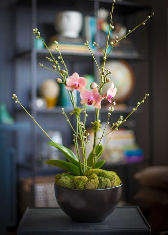 a fresh blooming orchid with moss on top is a cool idea for spring, cover plants in pots