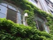 Cool Wooden Bird House For Apartment Inhabitants Brirdhouse By Vlaemsch