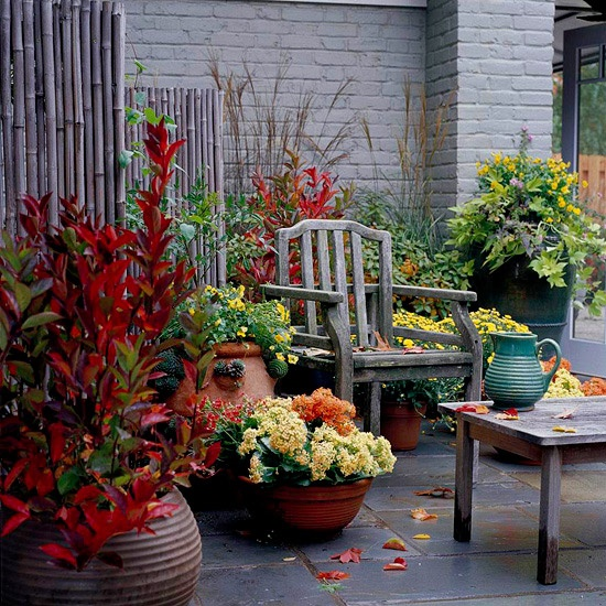 Always think about mixing plants' colors when you choosing them for your patio.