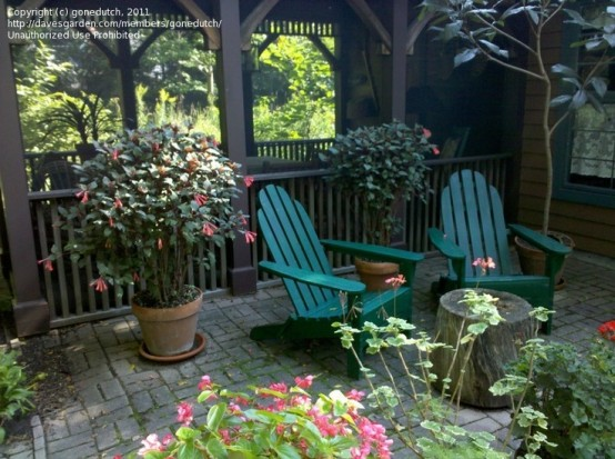 a simple rustic patio with green wooden chairs and lots of potted greenery and blooms