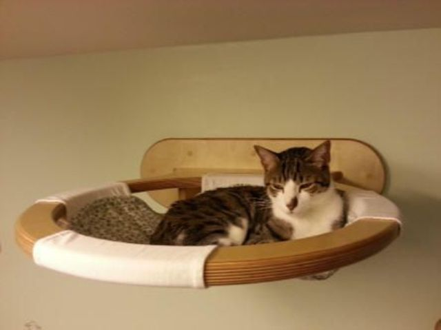 Creative And Cozy Cat Beds