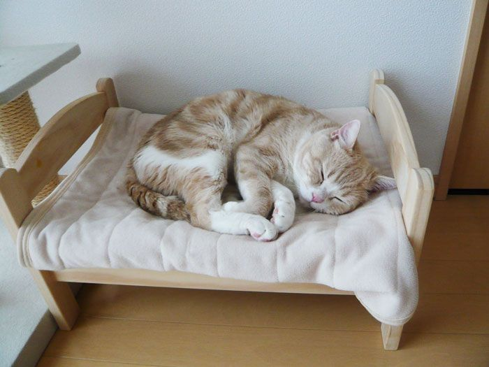 a cute wooden cat bed shaped as a human bed, with bedding is a very cool and cute idea to go for
