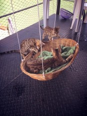 a suspended basket bed for cats is a nice idea for both indoors and outdoors and will add a rustic feel to the space