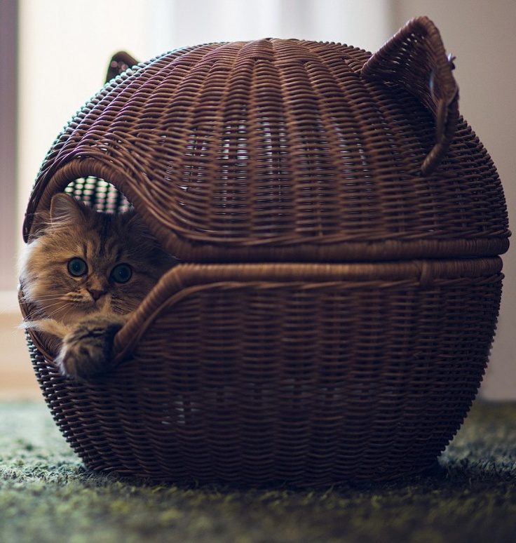 a basket bed shaped as a cat head is a cool and bold idea with a rustic feel and will be a nice retreat for your kitty