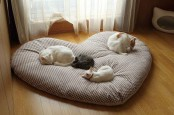 a large heart-shaped cat bed will be a nice option for several kitties or can be made smaller and used by just one cat