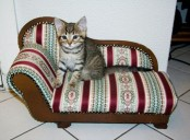 a bright sofa-like cat bed as a mini copy of a large human sofa, and your cat will enjoy it no less than you will