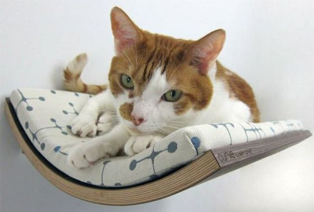 a curved wall mounted cat bed will be a loved spot by your cat as felines enjoy staying up