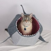 a fun shark cat bed is a nice retreat to hide and a fun bed to go for, it will add a modern funny feel to your interior