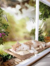 a comfy cat hammock bed like this one can be attached to a window, which means that your cat will be able to look at the street