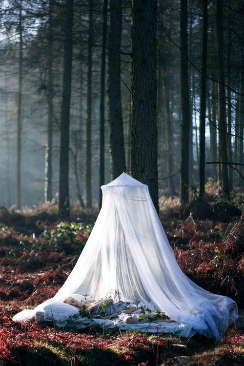 a daybed right in the forest and a mosquito net over it to save the sleeping person from bugs