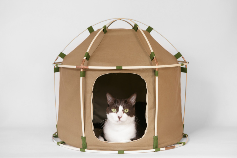 Picture Of cute cat study house of bamboo and cloth  1