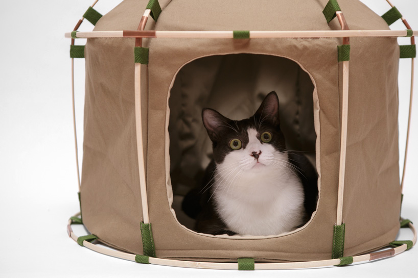 Picture Of cute cat study house of bamboo and cloth  3