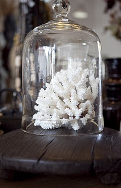corals in a cloche is a lovely idea for any seaside space, and a cloche can save your piece from dust and other stuff
