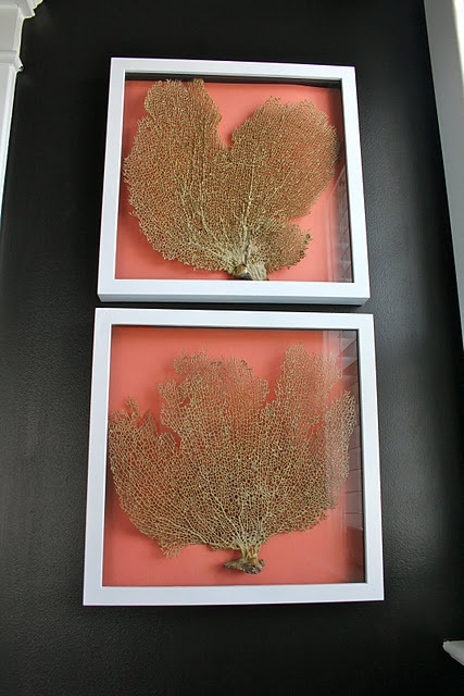 seaside artworks done with corals placed in frames with coral backdrops is a lovely idea to decorate any coastal space