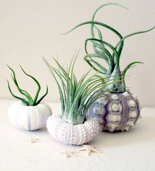 Decorating With Sea Urchins: 27 Cool Ideas