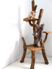 a cat tree made of tree branches and pieces of driftwood is a lovely idea to make your cats have fun and reuse some driftwood giving it a new life