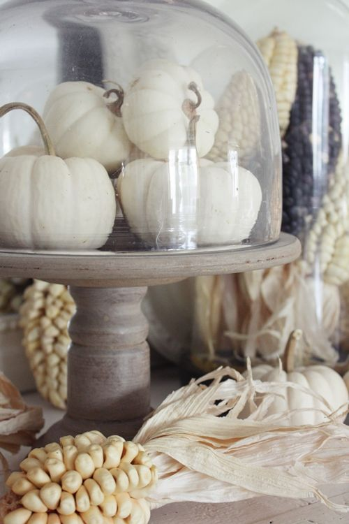 a wooden stand with white faux pumpkins and a cloche on top is a cool rustic decoration for the fall