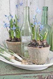 shabby chic planters with blue bulbs placed on a plate and vintage bottles will make your space spring and will match a shabby chic space