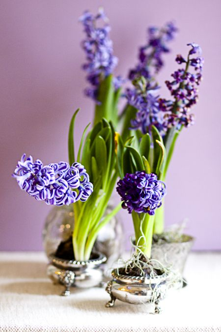 vintage silver sugar pots with purple hyacinths will bring a spring feel to any vintage space making it even more refined