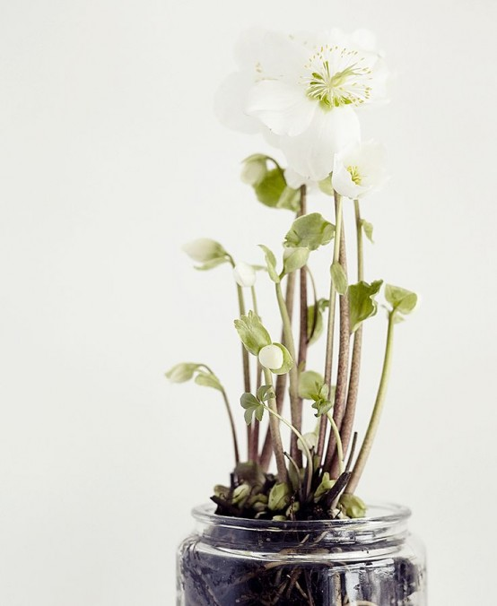 some white blooms planted in a simple clear jar will bring a slight spring feel to any space or to outdoors