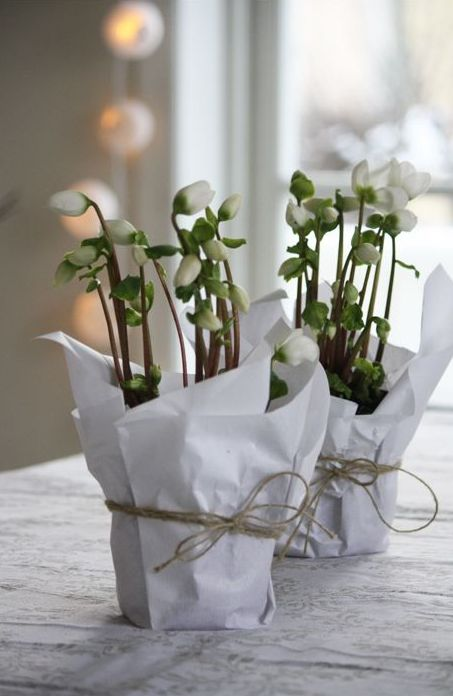 white spring blooms in planters wrapped with paper and secured with twine are a modern to rustic decoration to enjoy