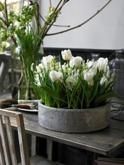 a vintage porcelain planter with white tulips and hyacinths is a lovely decoration for spring, it can be rocked outdoors and indoors and looks wow