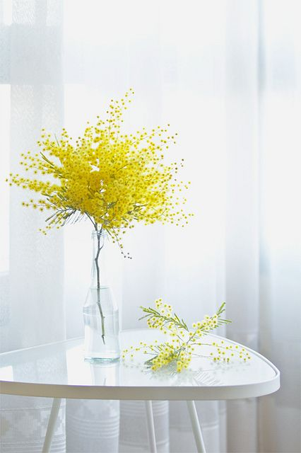 a bottle with mimosa is a fresh spring decor idea that will bring a touch of color to your space