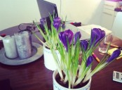 fresh and bright spring bulbs in pots are nice to refresh your working space
